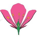 botanikaktar