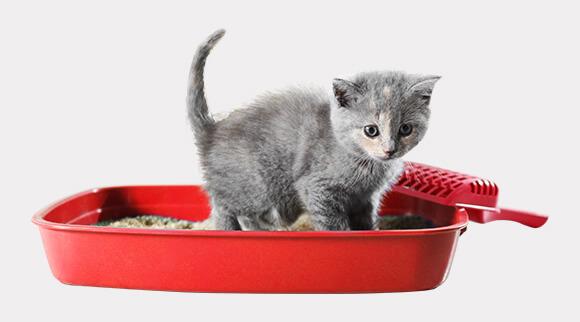 Kedi Kumu ve Kedi Tuvaletleri